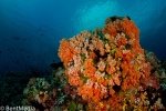 East Lembeh reef