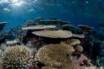 Healthy hard coral reef