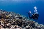 Diver over Acropora field