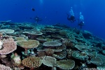 Coral reef at its best