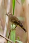 A warbler!