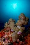 Soft corals, Raja Empat