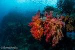 Soft corals, Raja Ampat