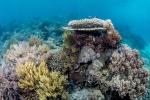 Reefscape, Komodo